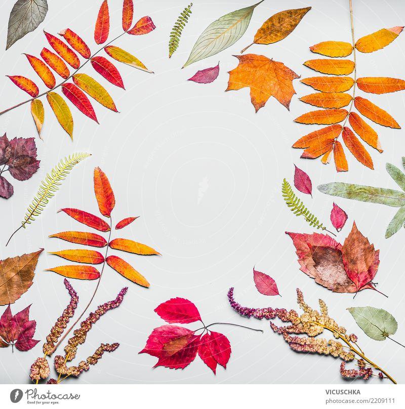 Herbst Rahmen aus verschiedenen bunten getrockneten Herbstlaub Stil Design Dekoration & Verzierung Natur Pflanze Blatt Hintergrundbild Herbarium herbstlich
