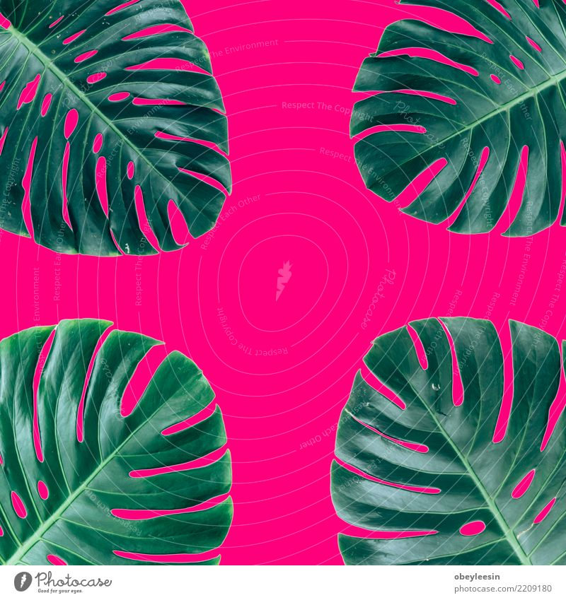 Kreatives Layout aus grünen Blättern. Flach legen. Natur-Konzept Pflanze Sommer Farbe weiß Baum Blatt Wald natürlich Kunst Garten Mode oben hell Wachstum