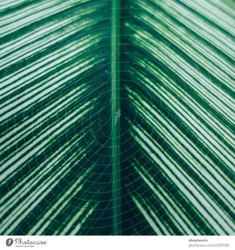 Kreatives Layout aus grünen Blättern. Flach legen Sommer Garten Tisch Kunst Natur Pflanze Baum Blatt Wald Fluggerät Mode Wachstum frisch hell trendy natürlich
