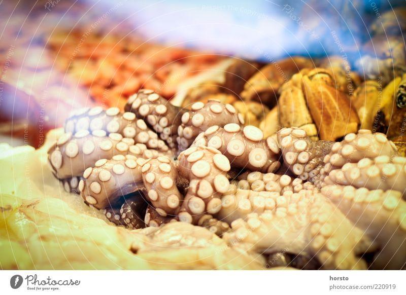 Pauls Untergang Lebensmittel Fisch Meeresfrüchte Ernährung Sushi exotisch Tier Totes Tier Octopus Tintenfisch Fischmarkt Farbfoto Detailaufnahme Menschenleer