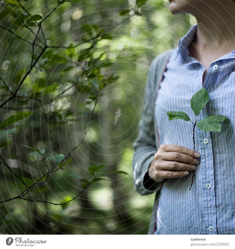 Andenken Mensch Natur Jugendliche Hand schön Sommer Blatt ruhig Wald Erholung Leben Umwelt Stil Zufriedenheit ästhetisch Lifestyle