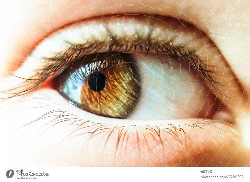 behind hazel eyes feminin Auge Kunst glänzend Blick exotisch schön braun gelb gold Gefühle Warmherzigkeit ästhetisch Genauigkeit Perspektive Sinnesorgane