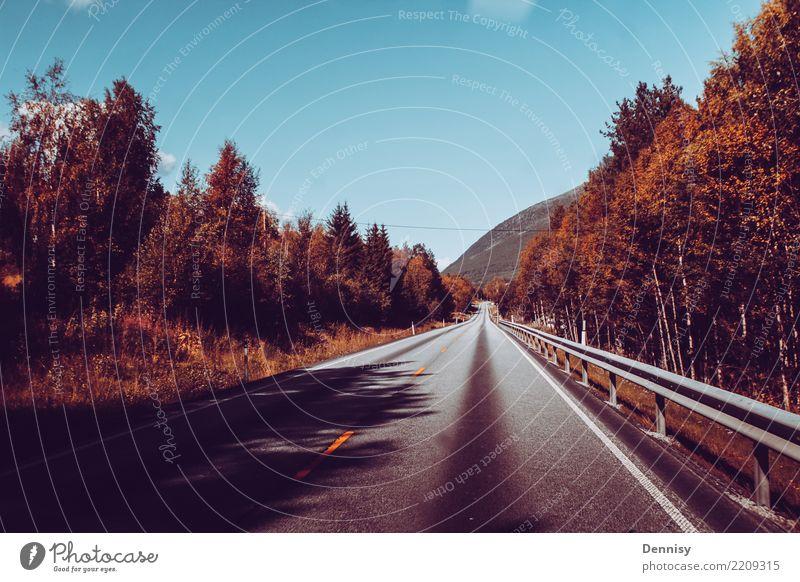 Norway road Ferien & Urlaub & Reisen Sommer Sonne Baum Erholung Freude Ferne Straße Gefühle Glück Tourismus Freiheit Stimmung Zufriedenheit wandern Verkehr