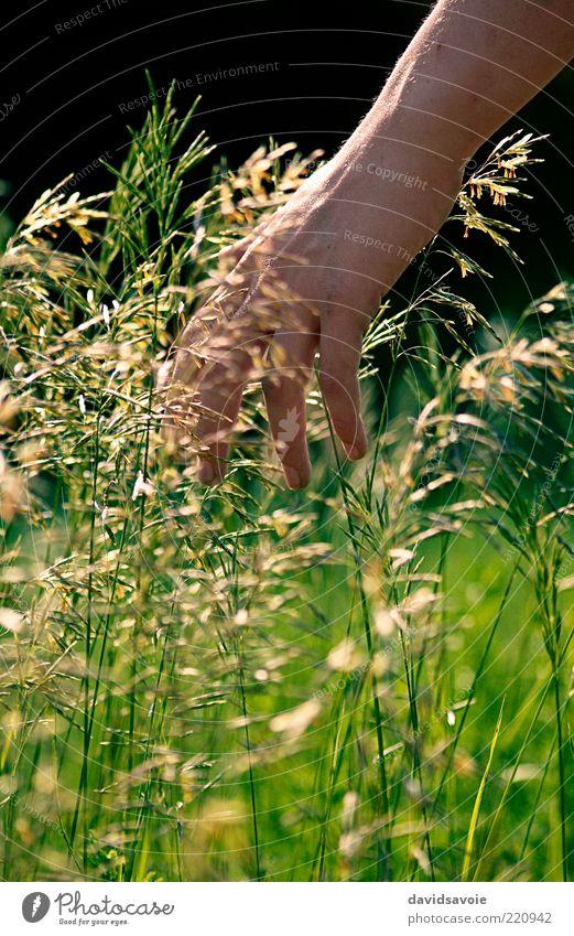 grün Hand Sommer Pflanze Sonne Leben Gras Freiheit Arme Finger Lifestyle Wellness Landwirtschaft Getreide Wohlgefühl Bioprodukte