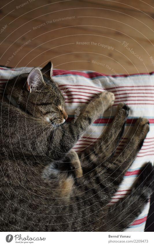 Braun getigerte Katze beim Schlafen auf einem Kissen Tier Haustier 1 schön braun Tigerfellmuster Pfote Holzfußboden Häusliches Leben Idylle friedlich schlafen