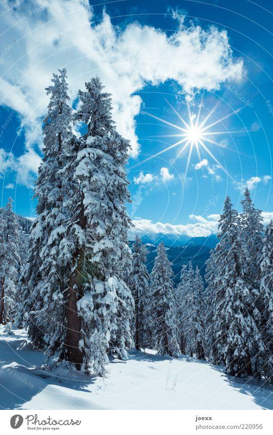 Bald Winter Schnee Berge u. Gebirge Natur Landschaft Himmel Wolken Sonne Sonnenlicht Schönes Wetter Baum Wald Alpen hoch kalt blau weiß rein ruhig