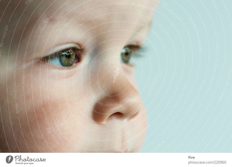 noch viel vor sich Mensch Kind Kleinkind Junge Kindheit Kopf Auge Nase 1 1-3 Jahre beobachten Blick träumen Glück schön Gefühle Fröhlichkeit Zufriedenheit