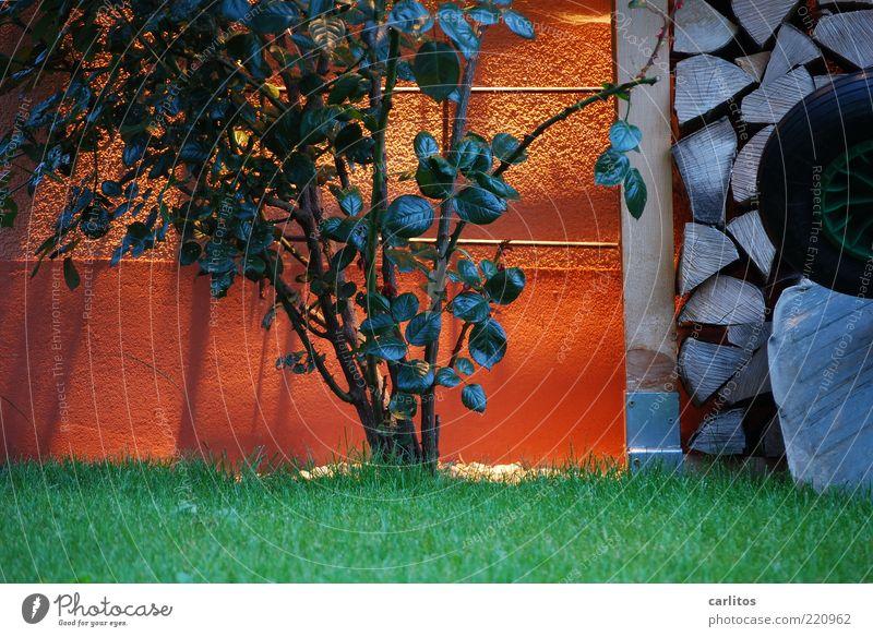 Saisonende grün Blatt Wiese Wand Garten Beleuchtung orange Rose Ordnung Rasen rund Sträucher Rad Putz Stapel Vorrat