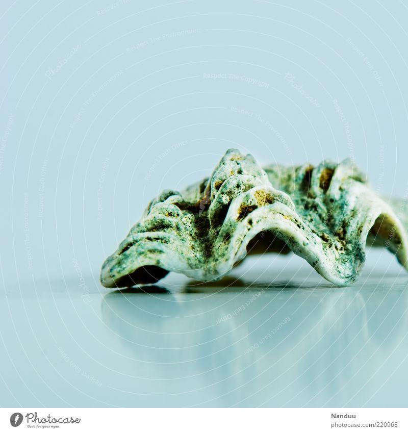 Meer Muschel² schön Sommer Tier kalt maritim Meerestier Muschelschale Muschelform