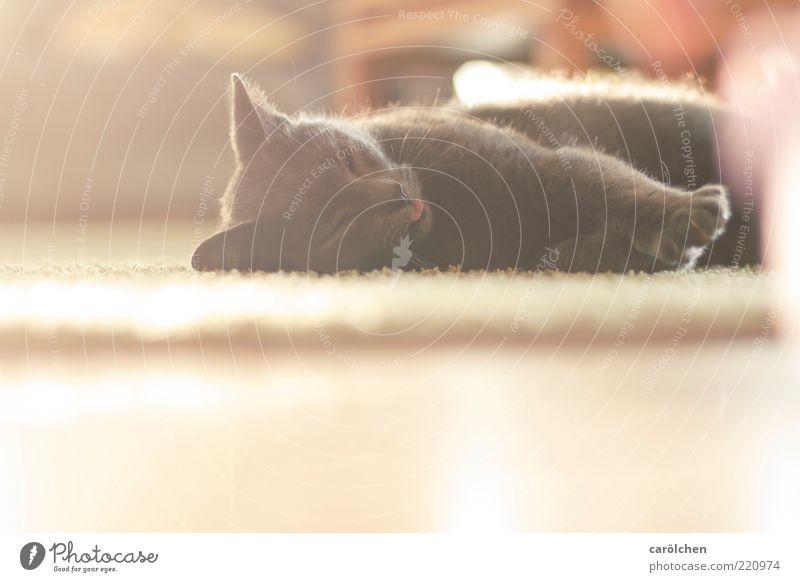 Ich bin zuhause. Tier Haustier Katze 1 gelb gold weiß Schnurren Erholung Boden Wohlgefühl Geborgenheit ruhig Zufluchtsort Farbfoto Gedeckte Farben