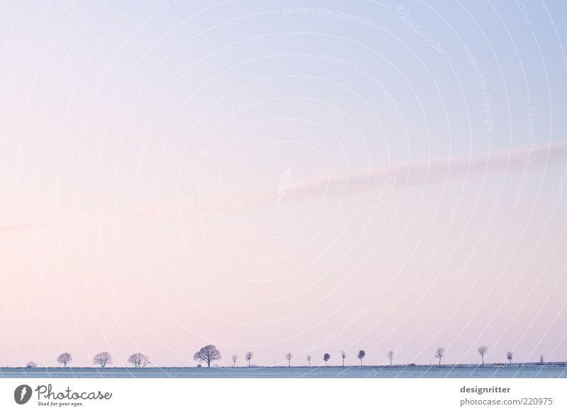Winterlicher Textfreiraum schön Himmel Baum ruhig Einsamkeit Ferne kalt Schnee Freiheit Eis hell Feld rosa Wetter Horizont