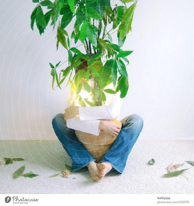 hug tree Mensch maskulin Mann Erwachsene 1 Umwelt Natur Klima Pflanze Baum Blatt Grünpflanze Topfpflanze Umarmen Umweltschutz Schutz schützend