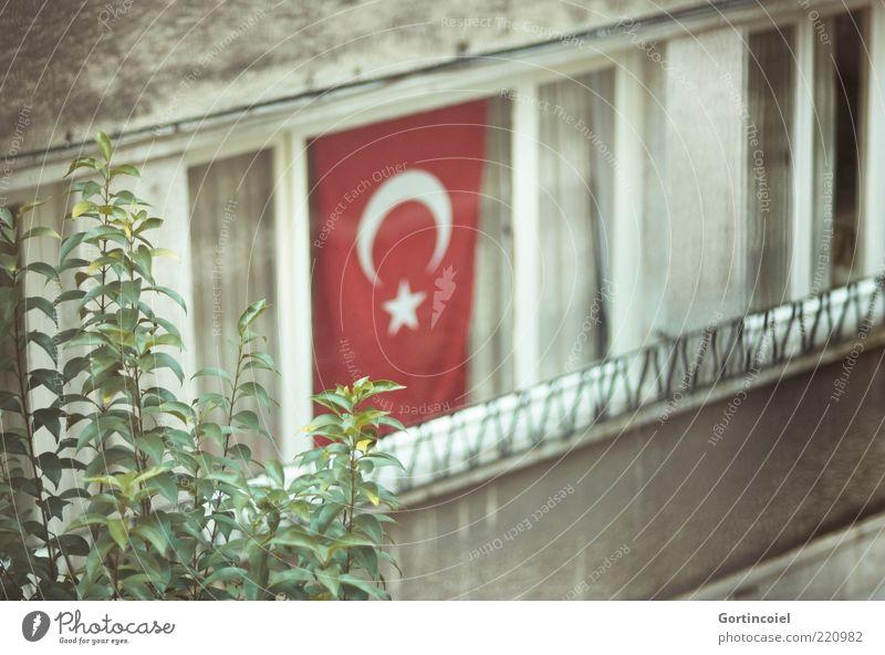 Feiertag Blatt Haus Fenster grau Fassade trist Fahne Dekoration & Verzierung Kultur Symbole & Metaphern Türkei Textfreiraum Istanbul Zweige u. Äste Pflanze Republik