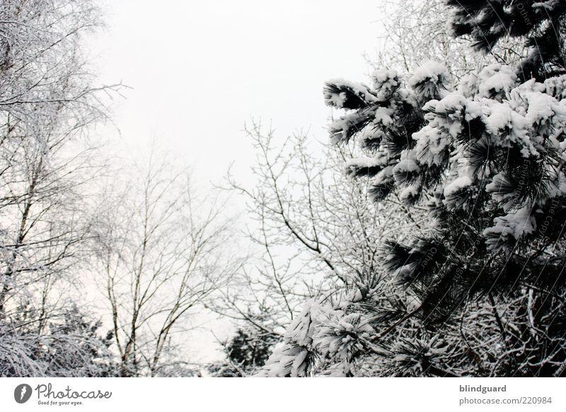 White Christmas 2010? Winter Schnee Natur Pflanze Himmel Wolkenloser Himmel Baum Wald Holz kalt schön trist schwarz weiß Farbfoto Menschenleer Tag Kontrast