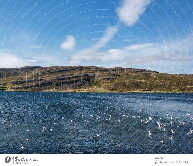 Frühstücksbuffet Natur Landschaft Pflanze Himmel Wolken Frühling Schönes Wetter Gras Berge u. Gebirge Fjord Meer fliegen Fressen Jagd natürlich blau braun gelb