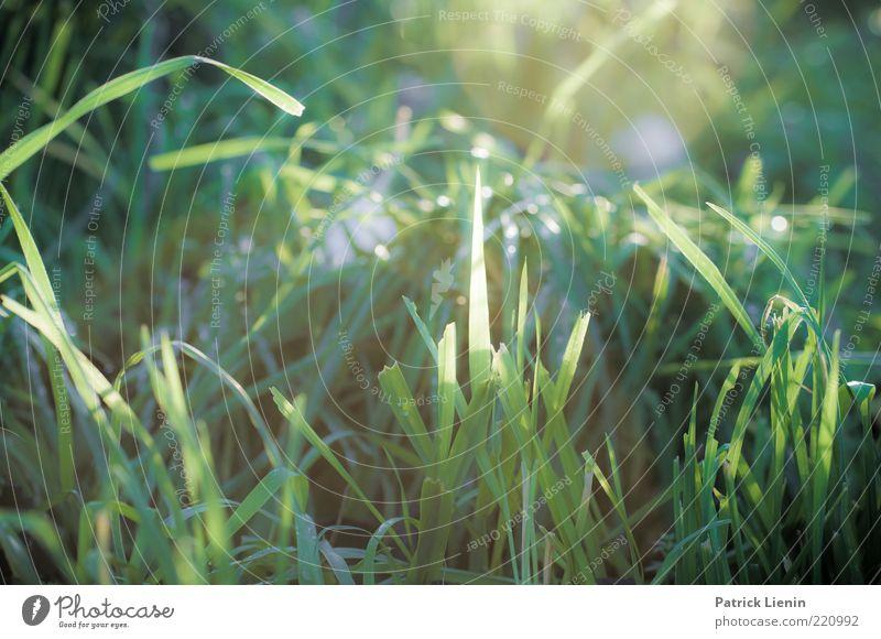 Good morning sunshine Natur schön grün Pflanze Blatt Wiese Herbst Gras Stimmung hell glänzend Wetter Umwelt Erde ästhetisch zart