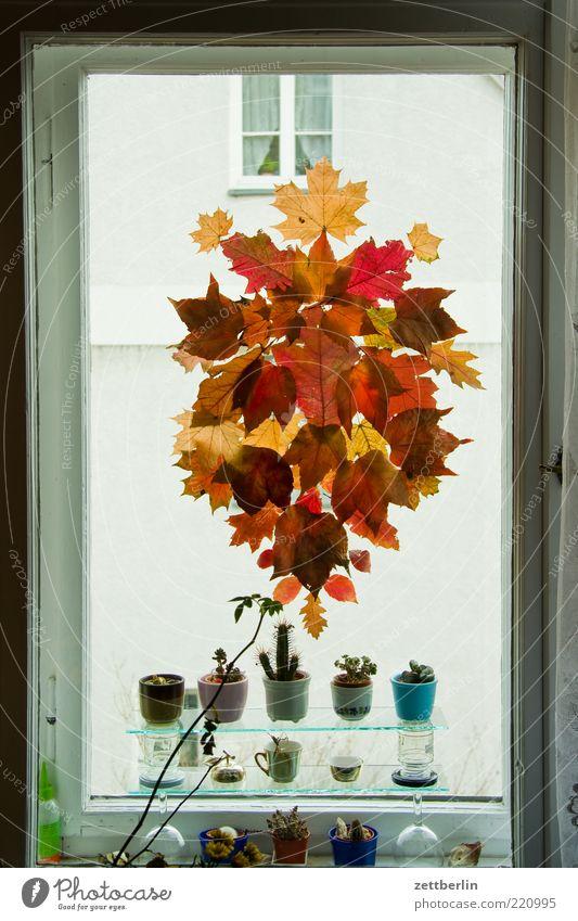 Herbst Lifestyle Stil Häusliches Leben Wohnung einrichten Innenarchitektur Dekoration & Verzierung Natur Blatt Fenster Schmuck Herbstlaub Kaktus mehrfarbig