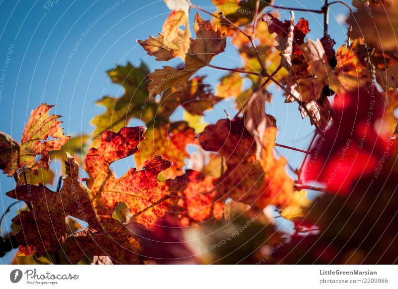 50 Schattierungen von Rot [3] Himmel Natur Pflanze blau schön grün Sonne rot Blatt gelb Umwelt Herbst orange gold Getränk Wein