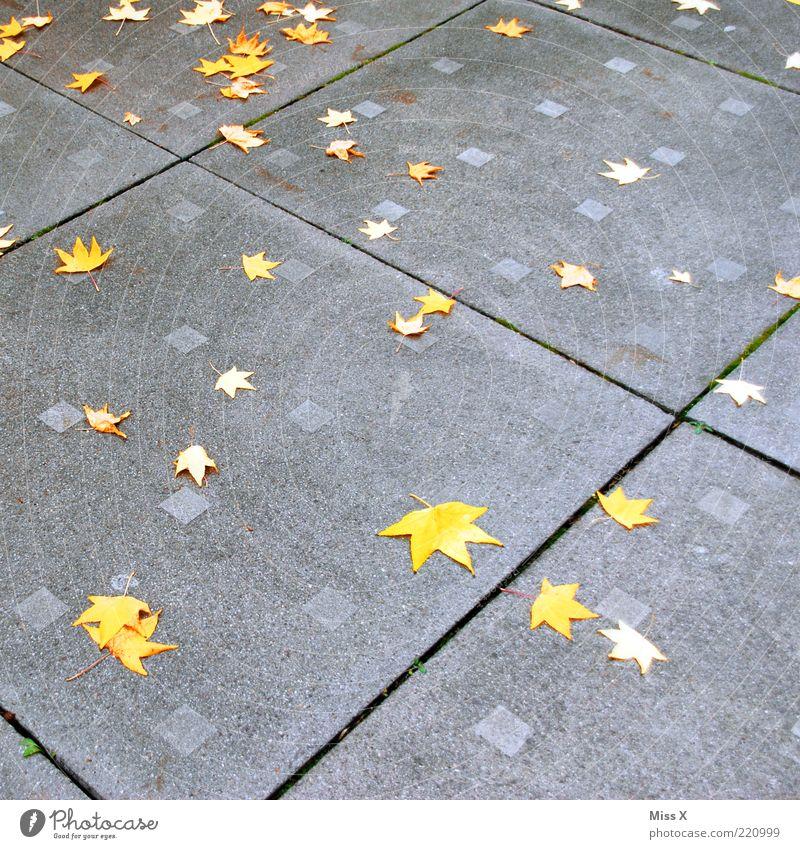 gefallene Sterne Herbst Blatt Platz Ahornblatt Steinplatten Herbstlaub herbstlich Farbfoto Außenaufnahme Muster Menschenleer Herbstfärbung Stern (Symbol) gelb