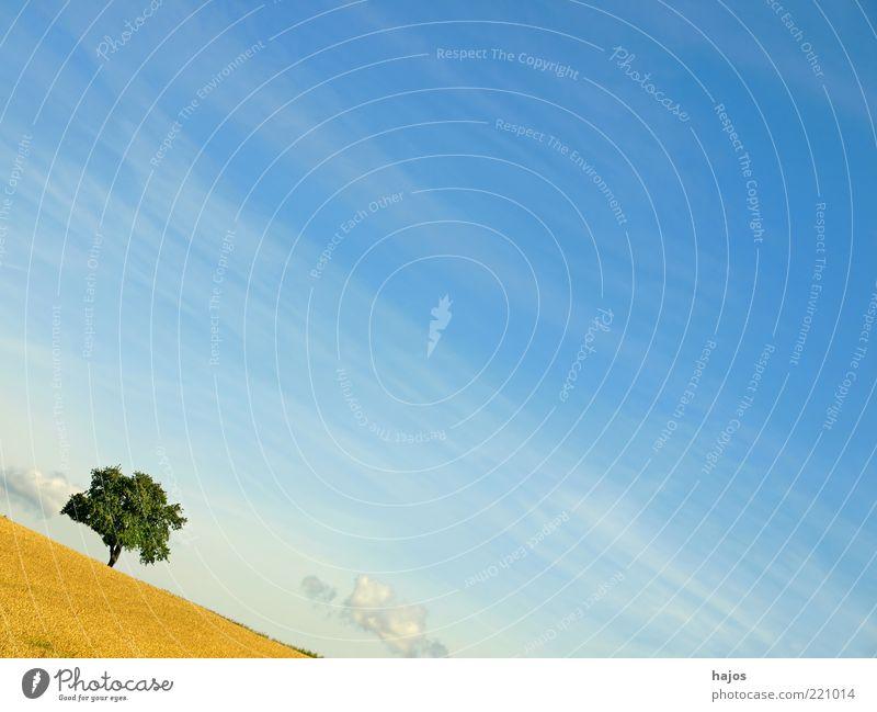 Sommer in Schräglage Natur Himmel Baum grün blau Wolken gelb Erholung Landschaft Stimmung Feld Umwelt Erde frisch ästhetisch