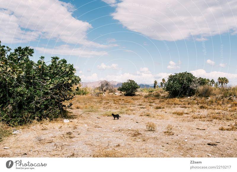 abergläubisch Katze Himmel Natur Ferien & Urlaub & Reisen blau Sommer grün Landschaft Sonne Meer Einsamkeit ruhig Umwelt Tourismus Sand frisch