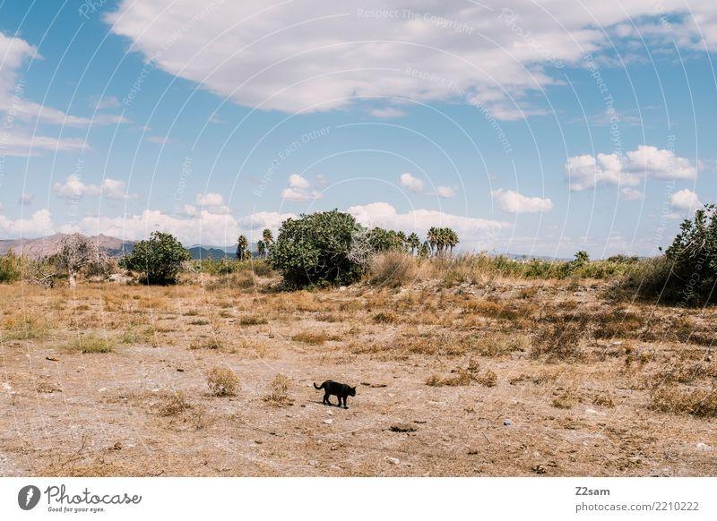 mieze Umwelt Natur Landschaft Sand Himmel Sommer Schönes Wetter Baum Sträucher Steppe Katze gehen elegant Armut Idylle stagnierend Surrealismus Griechenland Kos