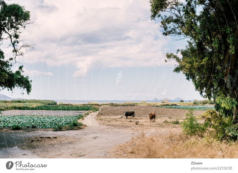 MUH auf griechisch Himmel Natur Ferien & Urlaub & Reisen blau Sommer grün Landschaft Baum Meer Einsamkeit ruhig Umwelt natürlich Küste Idylle stehen