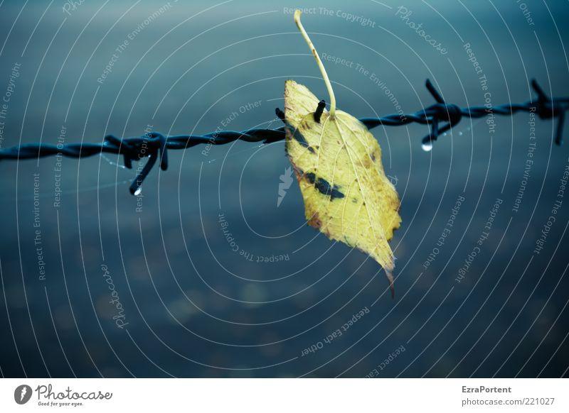 trapped leaf Natur blau Pflanze Einsamkeit Blatt schwarz gelb Umwelt dunkel kalt Herbst Metall Regen Wetter Feld Klima