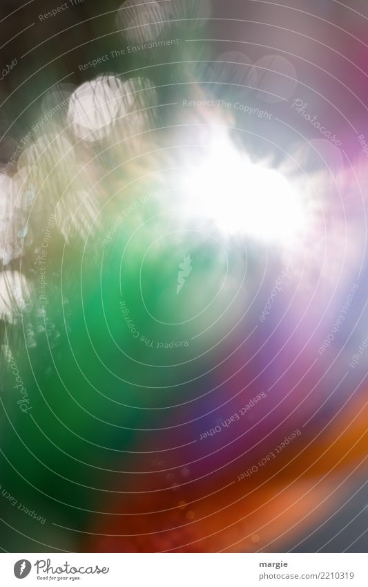 Explosions! Natur Pflanze Tier Sonne Blume Blatt Blüte Grünpflanze Nutzpflanze Garten mehrfarbig grün explodieren Lichtspiel Lichteinfall Lichtblick Hochformat