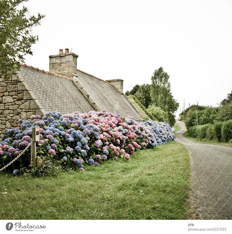 vergessene blütezeit Baum Blume blau Pflanze Sommer ruhig Haus Einsamkeit Straße Blüte Gras Wege & Pfade Landschaft rosa Rasen Sträucher