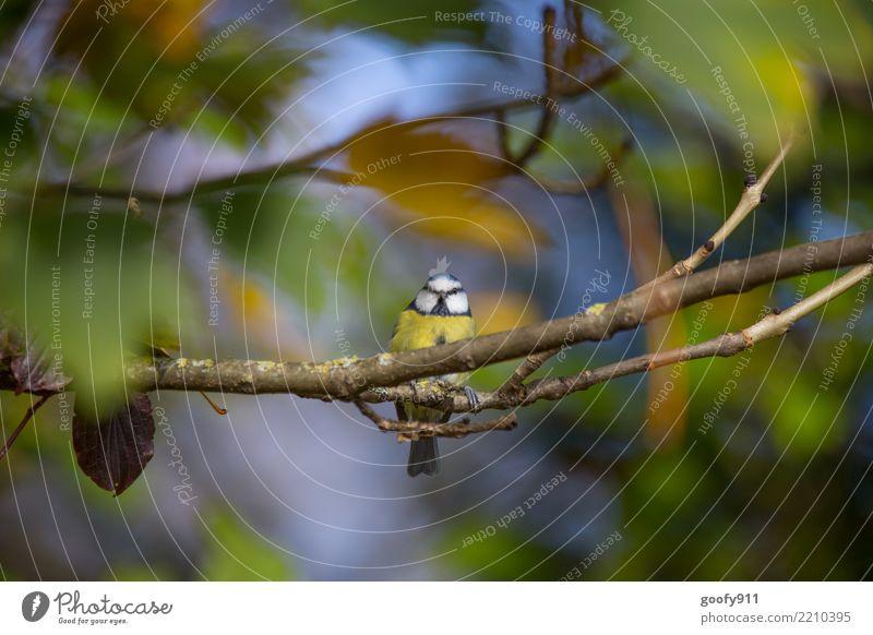 Dickerchen ;-))) Ausflug Natur Sonne Sonnenlicht Herbst Baum Blatt Park Wald Tier Vogel Tiergesicht Flügel Krallen 1 beobachten leuchten Farbfoto mehrfarbig