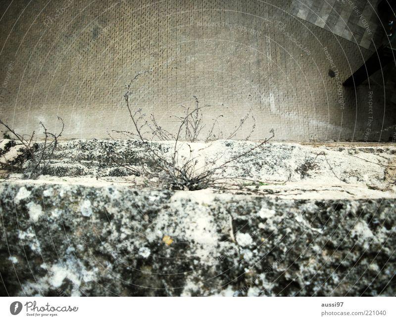 Abgrund Pflanze Schnee Wand Mauer Schilder & Markierungen trist Bürgersteig Am Rand abwärts Pflastersteine Zweige u. Äste Wege & Pfade Fußgängerzone