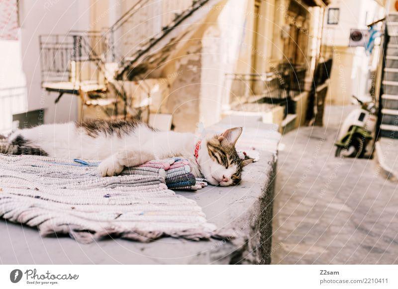 erstmal pennen Katze Erholung ruhig Straße träumen liegen genießen schlafen Pause Altstadt Gelassenheit Haustier Griechenland Decke kuschlig Fischerdorf