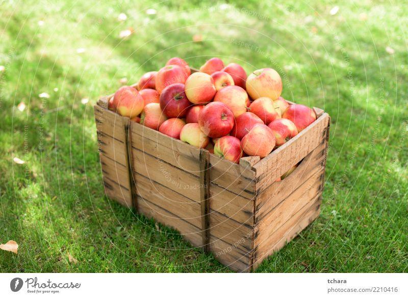 rote Äpfel Frucht Apfel Saft Sommer Garten Natur Herbst Container Wachstum frisch hell lecker natürlich saftig grün weiß Farbe Obstgarten Lebensmittel Korb