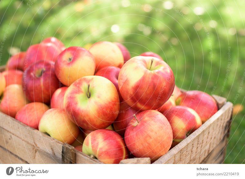 Reife Äpfel Frucht Apfel Saft Sommer Garten Natur Landschaft Pflanze Container Wachstum frisch hell lecker natürlich saftig grün rot Farbe Hintergrund