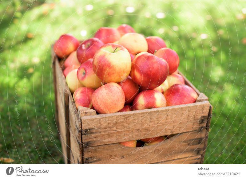 rote Äpfel Frucht Apfel Saft Sommer Garten Natur Gras Container frisch hell lecker natürlich saftig grün Farbe Gesundheit Lebensmittel Korb organisch fallen