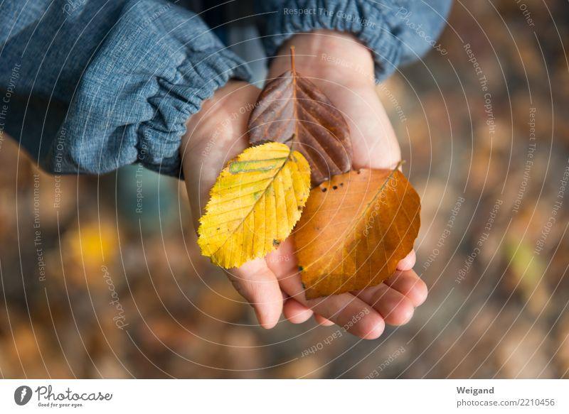 Drei VI Kind Hand Blatt Wald gelb Herbst Glück braun Zufriedenheit wandern träumen Kindheit entdecken Wohlgefühl harmonisch Sammlung
