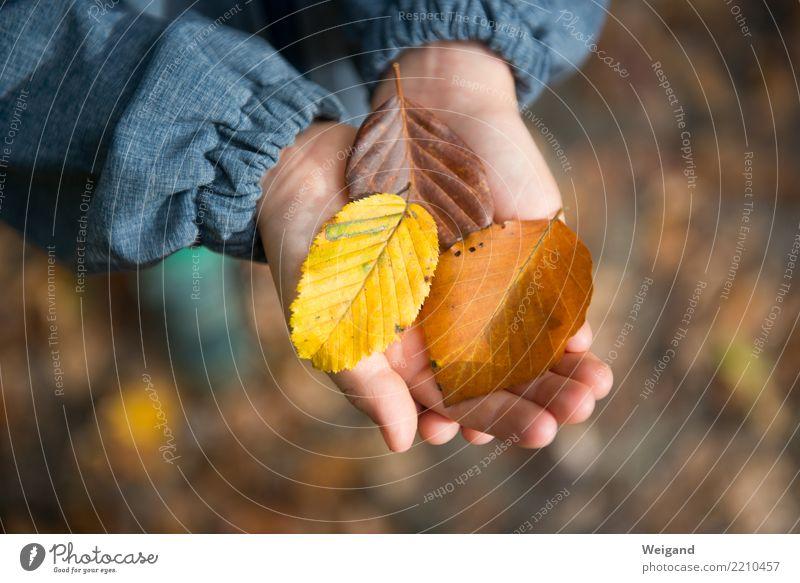 Drei I Sinnesorgane ruhig Meditation Duft Kinderspiel Junge Kindheit wählen träumen Traurigkeit Zusammensein braun mehrfarbig gelb Solidarität Hilfsbereitschaft