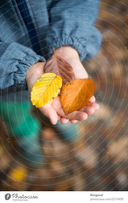 Tricolore Allergie Kindererziehung Kindergarten lernen Mensch Kleinkind Kindheit 1 Baum Duft braun mehrfarbig gelb friedlich Güte Selbstlosigkeit Menschlichkeit