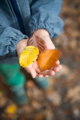 Tricolore Kind Mensch Baum Blatt Wald gelb Herbst braun wandern Kindheit lernen 3 Hilfsbereitschaft Gelassenheit Duft Kleinkind