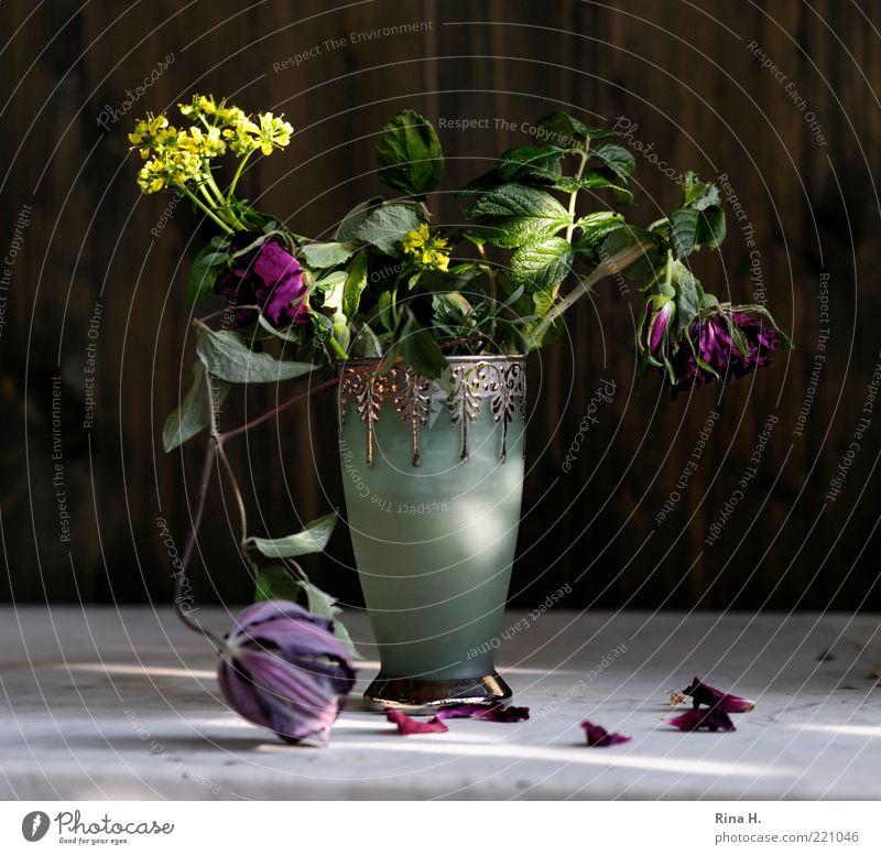 SommerStill Lifestyle elegant Blühend verblüht grün violett Gefühle Lebensfreude ästhetisch Vergänglichkeit Wandel & Veränderung Stillleben Clematis Wildrosen
