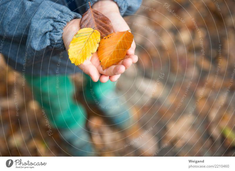 Drei VII Zufriedenheit Sinnesorgane ruhig Meditation Duft Kindergarten Kleinkind Kindheit Hand 1 Mensch festhalten träumen Neugier braun gelb friedlich