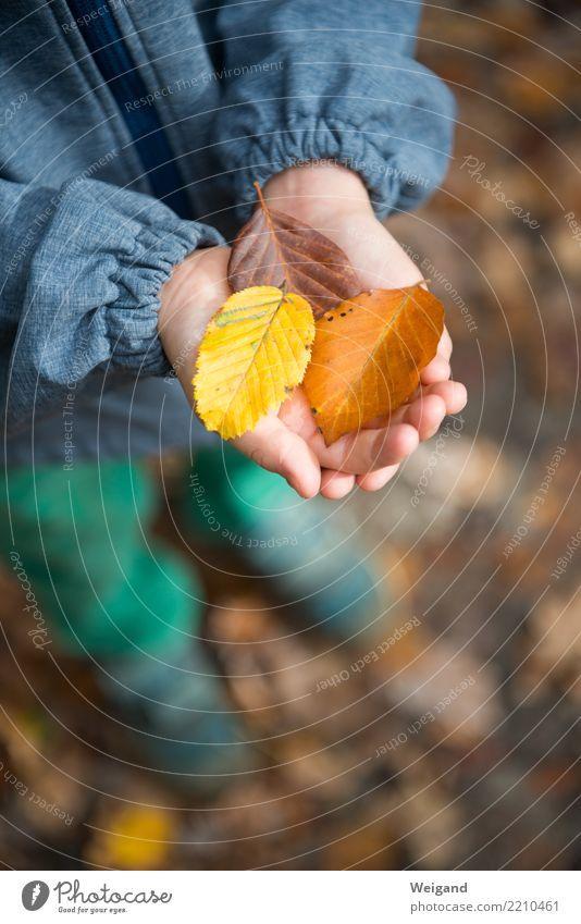 Drei X Erholung ruhig Meditation Spielen Kind Kleinkind Kindheit 1 Mensch träumen Traurigkeit trösten dankbar achtsam Toleranz Leben vernünftig Weisheit