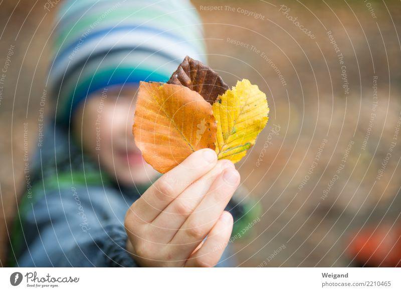 Drei IV Zufriedenheit Sinnesorgane Duft Kind Junge Kindheit 1 Mensch wählen träumen Traurigkeit fest braun mehrfarbig gelb Selbstlosigkeit Menschlichkeit