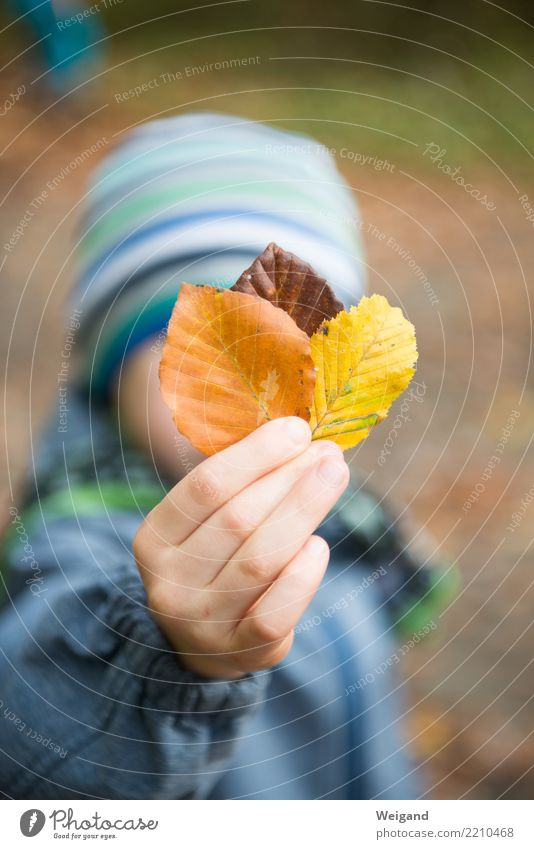 Drei II Kind Mensch Blatt Wald gelb Herbst Gesundheit braun Zufriedenheit wandern Kindheit lernen berühren 3 Wohlgefühl Gelassenheit
