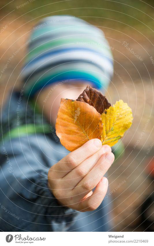 Drei VI Kind Junge Kindheit 1 Mensch Park entdecken Erholung toben träumen Traurigkeit trösten dankbar achtsam Vorsicht Gelassenheit Toleranz Herbst Blatt Hand