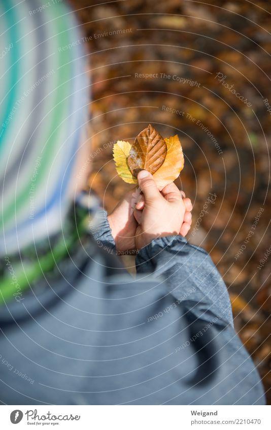 Tricolore Kind Mensch Hand Erholung Blatt ruhig Wald Herbst Familie & Verwandtschaft Junge Glück braun Zufriedenheit wandern Kindheit 3
