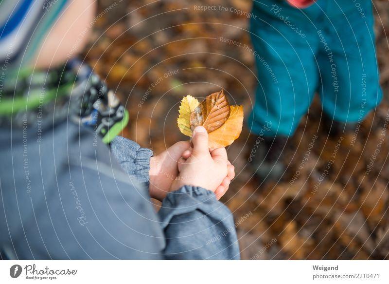Drei VIII Kind Blatt Wald Leben gelb Herbst Spielen Schule braun Freizeit & Hobby wandern genießen einfach 3 Kindergarten Sinnesorgane