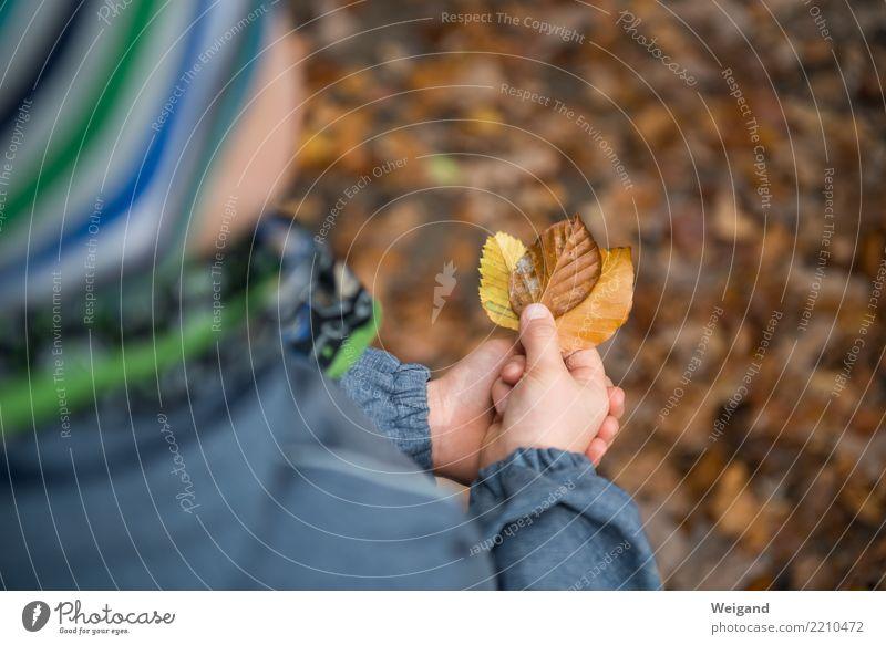 Drei III Kind Mensch Blatt Freude Leben gelb Umwelt Herbst braun Zufriedenheit Park träumen Kindheit 3 Trauer Leidenschaft