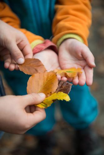 Sammeln & Tauschen Zufriedenheit Kindererziehung Kindergarten lernen Kleinkind Mädchen Junge Kindheit 2 Mensch schlechtes Wetter einzigartig Wald Blatt Herbst
